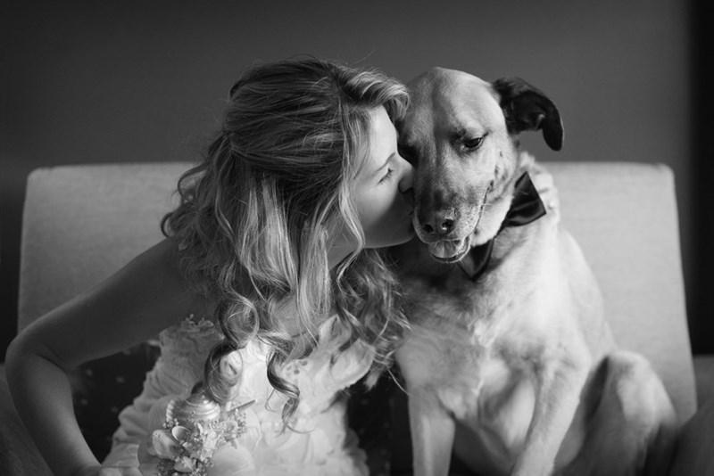 wedding dog - Photograph