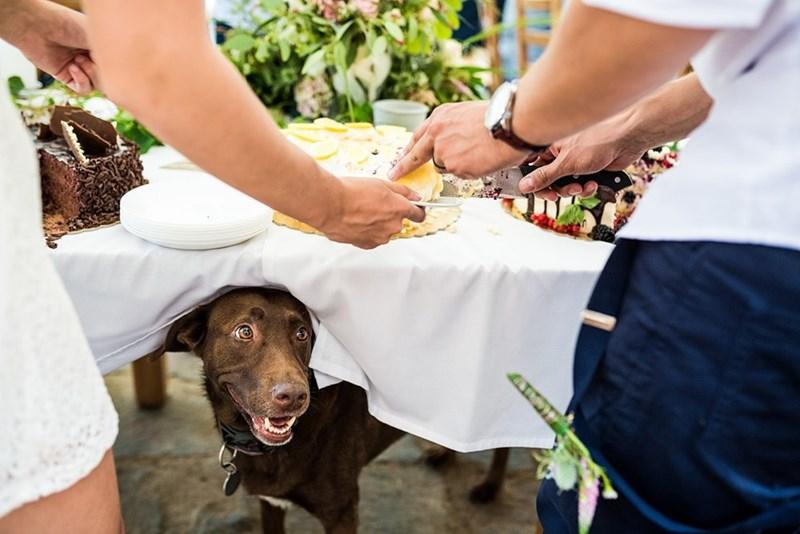 wedding dog - Canidae