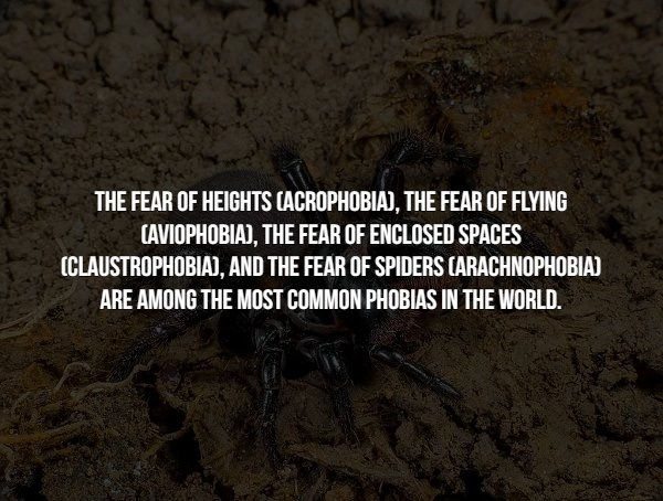 phobia - Text - THE FEAR OF HEIGHTS CACROPHOBIA), THE FEAR OF FLYING CAVIOPHOBIA), THE FEAR OF ENCLOSED SPACES ICLAUSTROPHOBIA), AND THE FEAR OF SPIDERS (ARACHNOPHOBIA) ARE AMONG THE MOST COMMON PHOBIAS IN THE WORLD.