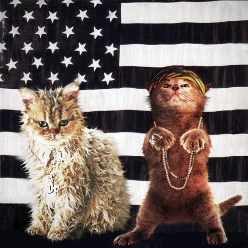 kitten covers - Cat