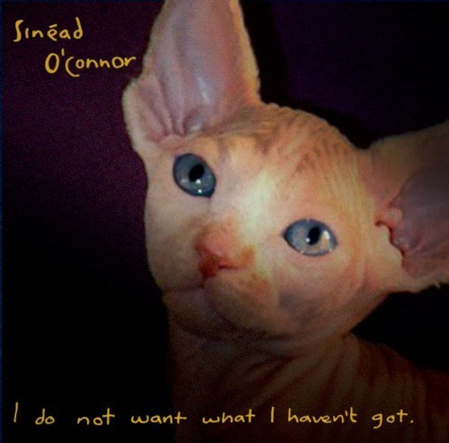 kitten covers - Cat - Sinead OConnor do not want what I haven't qot.