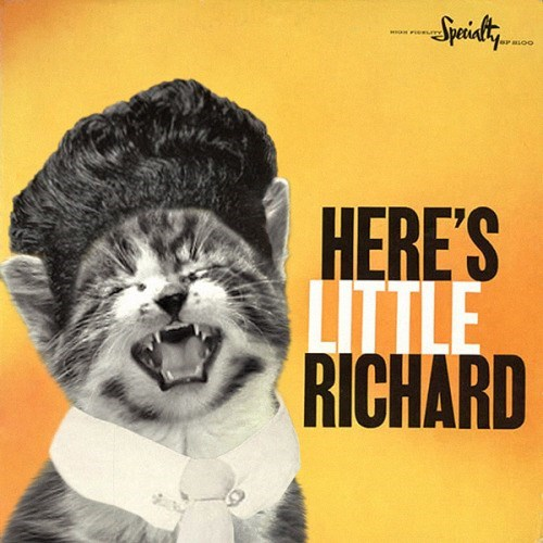 kitten covers - Facial expression - Spidty er asoo HERE'S LITTLE RICHARD