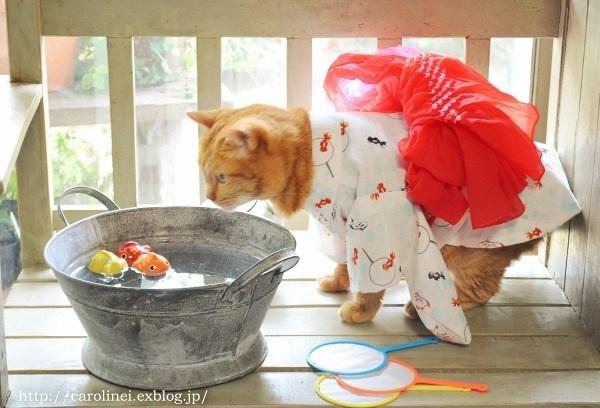 kimono - Cat - http://earolinei.exblog.jp/