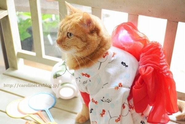 kimono - Cat - http://carolinei.exblog.jp/