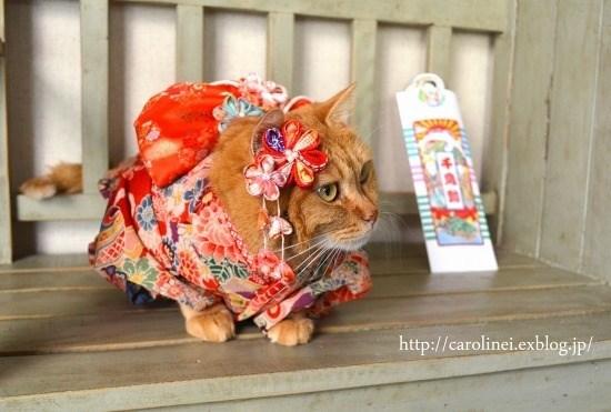 kimono - Dog clothes - http://carolinei.exblog.jp/