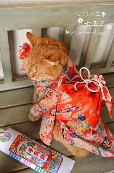 kimono - Cat - ニ0ー三年 七五三 http://carolinei.exblog,jp/