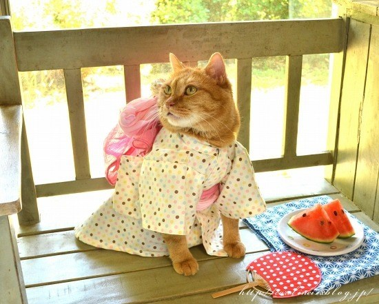 kimono - Cat