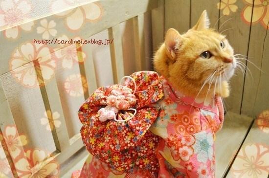 kimono - Cat - htep://carolinet.exblog.jP