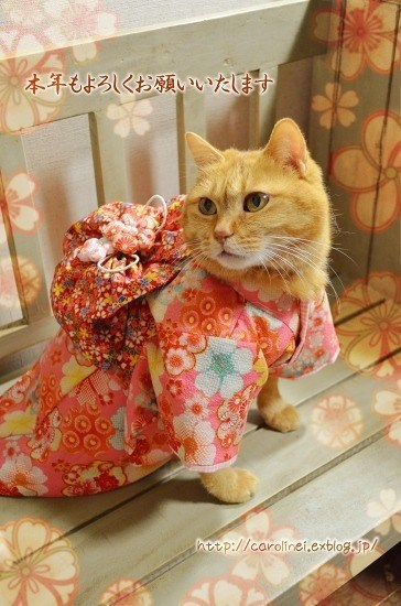 kimono - Cat - 本年もよろくお願いいたします htep://carolinei.exblogajp/