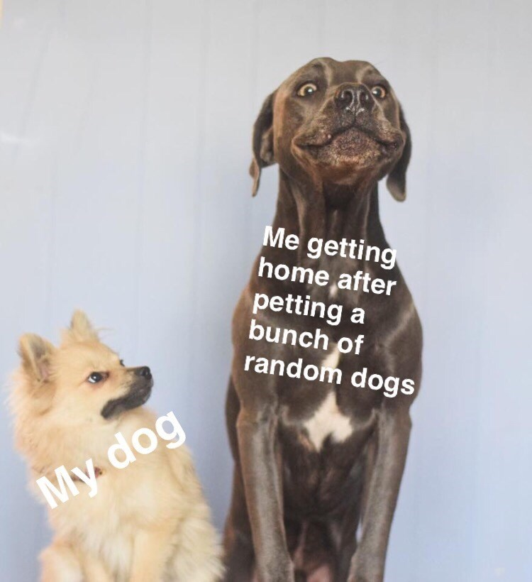 meme - Dog breed - Me getting home after petting a bunch of random dogs My dog