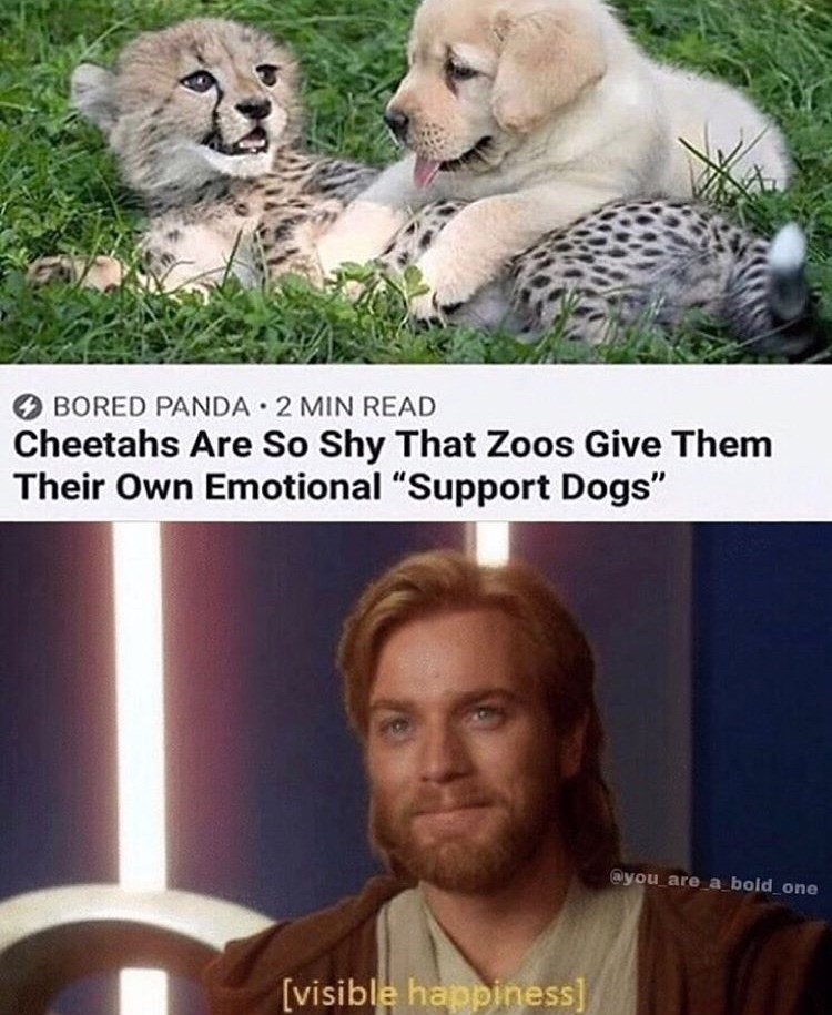 """Meme - """"Cheetahs Are So Shy That Zoos Give Them Their Own Emotional """"Support Dogs"""" @you are_a bold one [visible happiness]"""""""