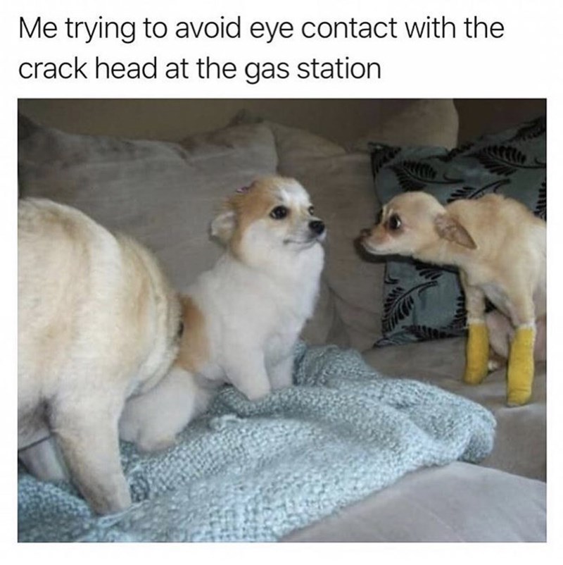 animal meme - Dog - Me trying to avoid eye contact with the crack head at the gas station