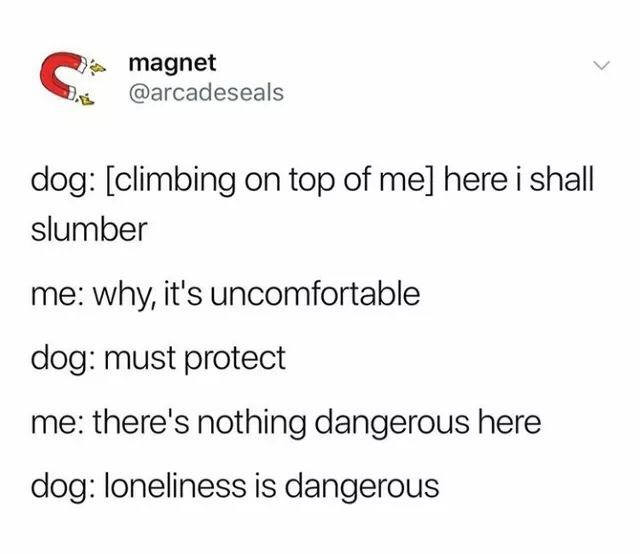 animal meme - Text - magnet @arcadeseals dog: [climbing on top of me] here i shall slumber me: why, it's uncomfortable dog: must protect me: there's nothing dangerous here dog: loneliness is dangerous
