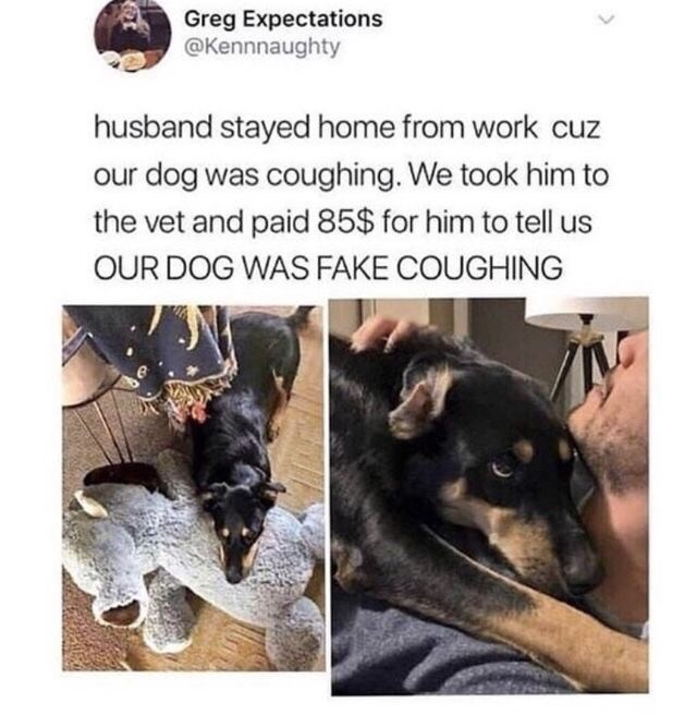 animal meme - Dog - Greg Expectations @Kennnaughty husband stayed home from work cuz our dog was coughing. We took him to the vet and paid 85$ for him to tell us OUR DOG WAS FAKE COUGHING