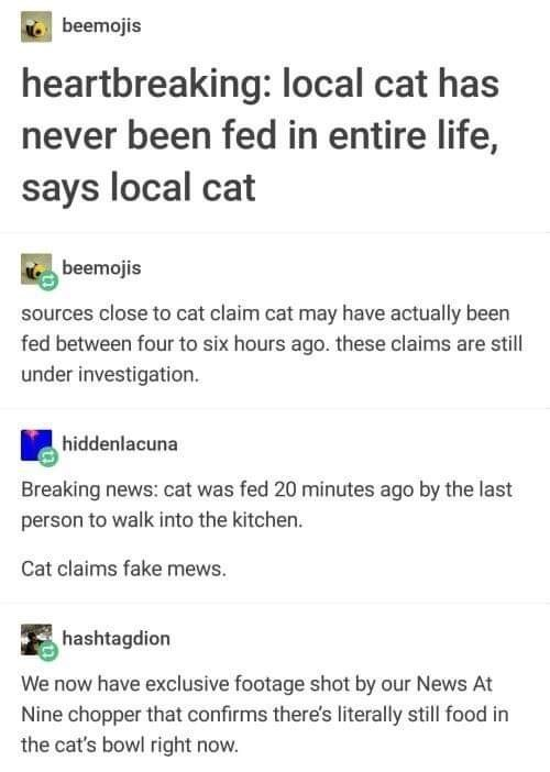 animal meme - Text - beemojis heartbreaking: local cat has never been fed in entire life, says local cat beemojis sources close to cat claim cat may have actually been fed between four to six hours ago. these claims are stil under investigation. hiddenlacuna Breaking news: cat was fed 20 minutes ago by the last person to walk into the kitchen. Cat claims fake mews. hashtagdion We now have exclusive footage shot by our News At Nine chopper that confirms there's literally still food in the cat's b
