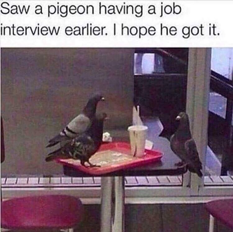 animal meme - Bird - Saw a pigeon having a job interview earlier. I hope he got it.