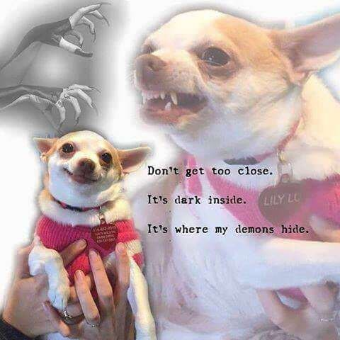 animal meme - Dog - Don't get too close. It's dark inside. LILY L It's where my demons hide.