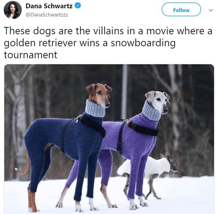 animal meme - Vertebrate - Dana Schwartz Follow @DanaSchwartzzz These dogs are the villains in a movie where a golden retriever wins a snowboarding tournament
