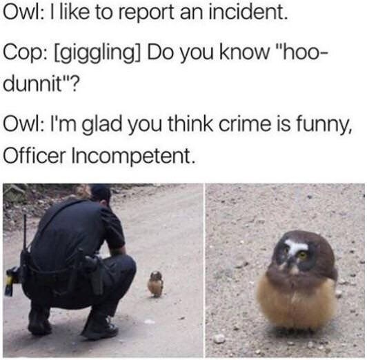 """animal meme - Text - Owl: I like to report an incident. Cop: [giggling] Do you know """"hoo- dunnit""""? Owl: I'm glad you think crime is funny, Officer Incompetent."""