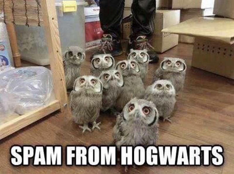 """Meme - """"SPAM FROM HOGWARTS"""""""