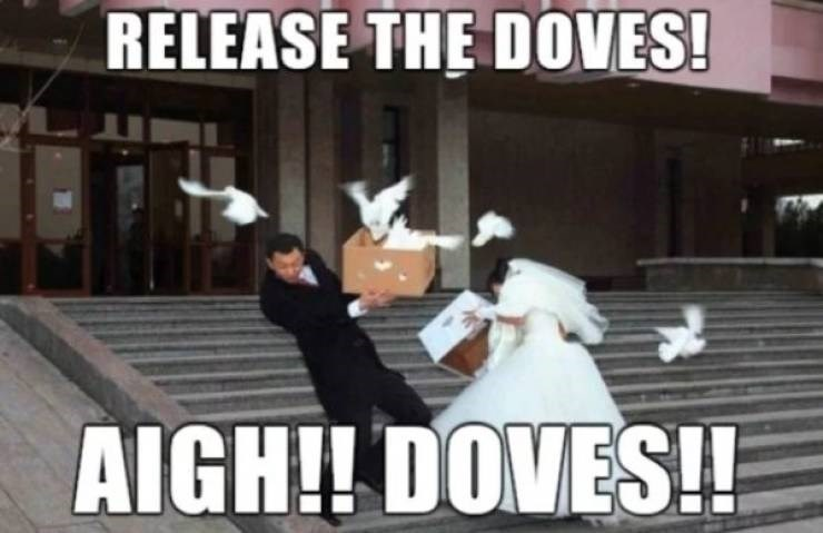 wedding - Photograph - RELEASE THE DOVES! AIGH!! DOVES!!