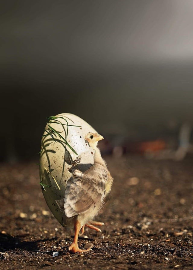 cute animal - Bird