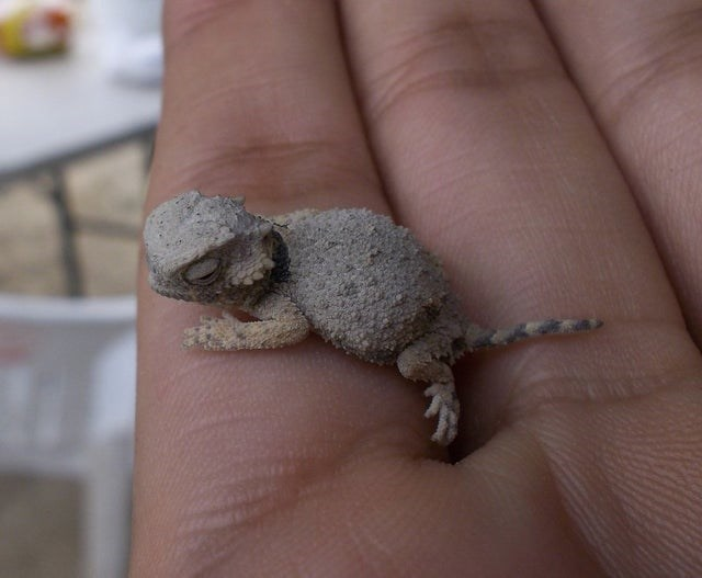 cute animal - Lizard
