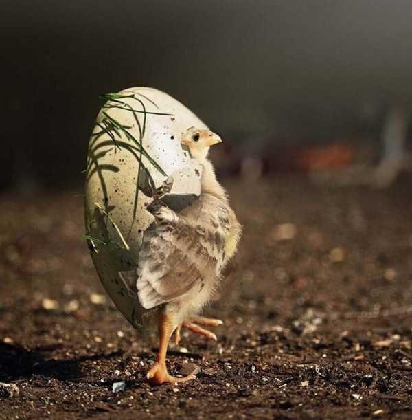 Bird still in the egg