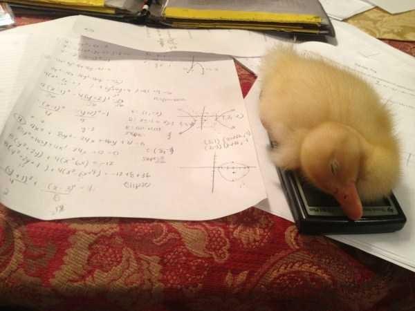 Cat - y Cpio