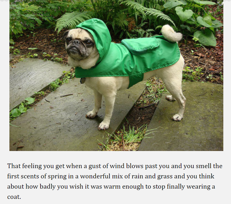 pug - Pug - That feeling you get when a gust of wind blows past you and you smell the first scents of spring in a wonderful mix of rain and grass and you think about how badly you wish it was warm enough to stop finally wearing a coat.