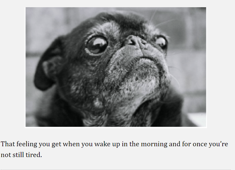 pug - Pug - That feeling you get when you wake up in the morning and for once you're not still tired.