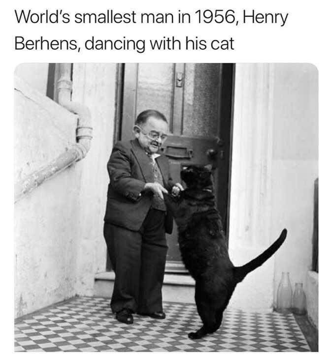 dancing cat history small man - 9341911552