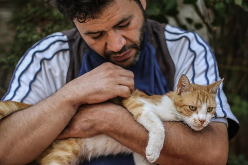 aleppo cats - Cat