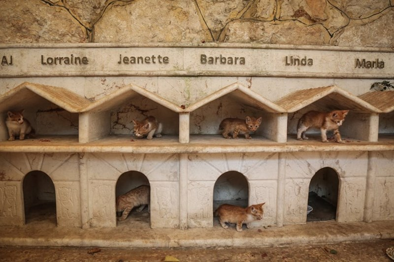 aleppo cats - Doghouse - Lorraine Jeanette Barbara Linda AJ Marla