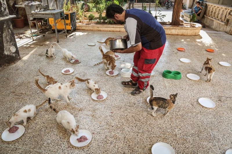 aleppo cats - Chicken