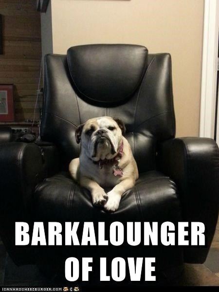meme of dog on the couch