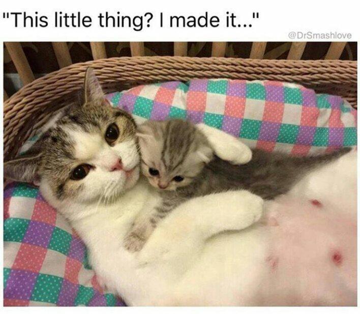 cat photos - 9341949184
