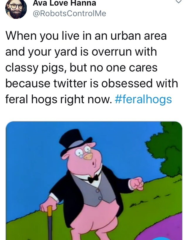 feral hog memes - Cartoon - Ava Love Hanna @RobotsControlMe When you live in an urban area and your yard is overrun with classy pigs, but no one cares because twitter is obsessed with feral hogs right now. #feralhogs