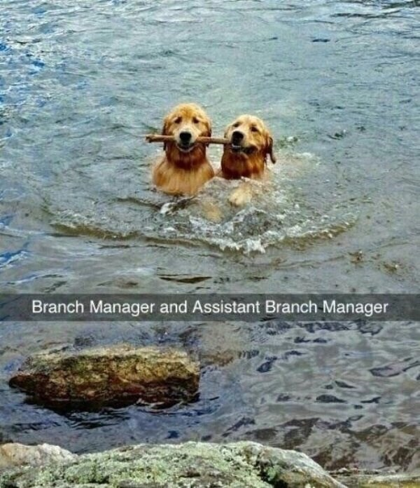 Vertebrate - Branch Manager and Assistant Branch Manager
