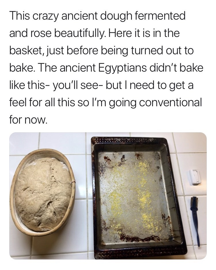 Text - This crazy ancient dough fermented and rose beautifully. Here it is in the basket, just before being turned out to bake. The ancient Egyptians didn't bake like this- you'll see- but I need to get a feel for all this so I'm going conventional for now.