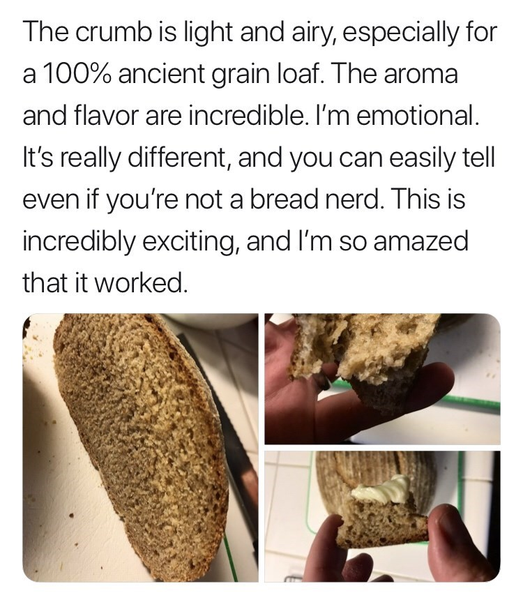 Gluten - The crumb is light and airy, especially for a 100% ancient grain loaf. The aroma and flavor are incredible. I'm emotional. It's really different, and you can easily tell even if you're not a bread nerd. This is incredibly exciting, and I'm so amazed that it worked.