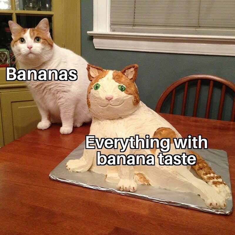 Cat - Bananas Everything with banana taste