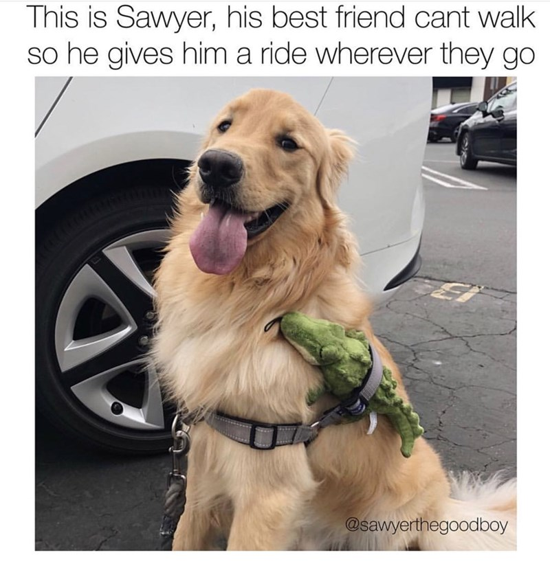 """Meme - """"This is Sawyer, his best friend cant walk so he gives him a ride wherever they go"""""""