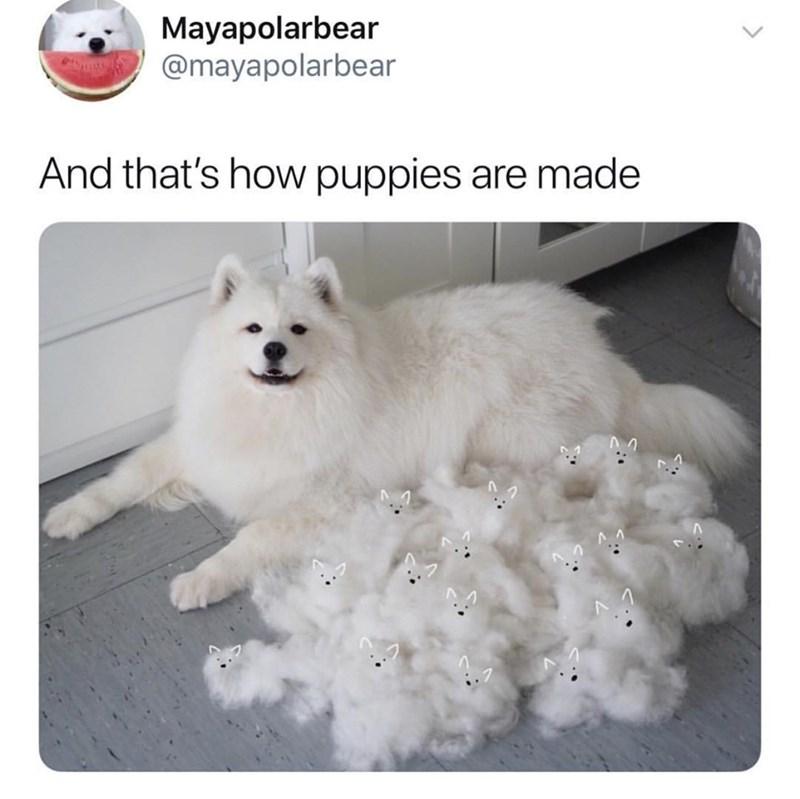 Dog - Mayapolarbear @mayapolarbear And that's how puppies are made