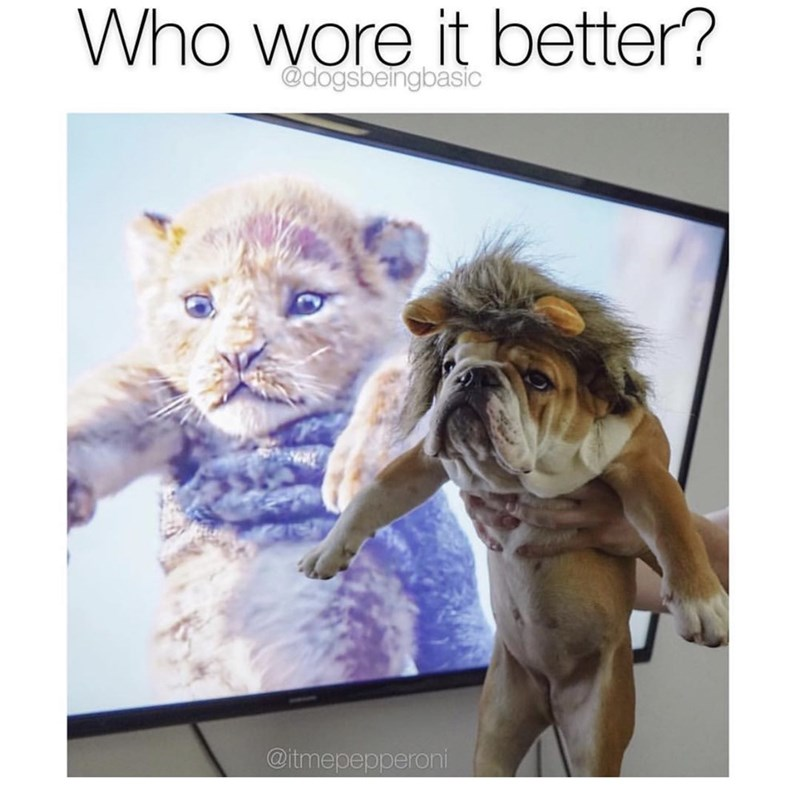 Text - Who wore it better? @dogsbeingbasic @itmepepperoni