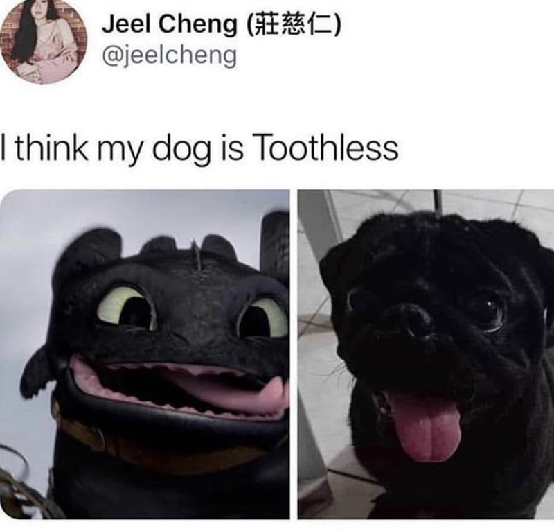 Pug - Jeel Cheng @jeelcheng I think my dog is Toothless