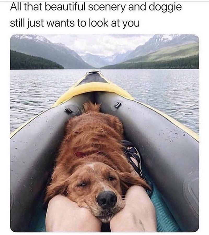 Boating - All that beautiful scenery and doggie still just wants to look at you