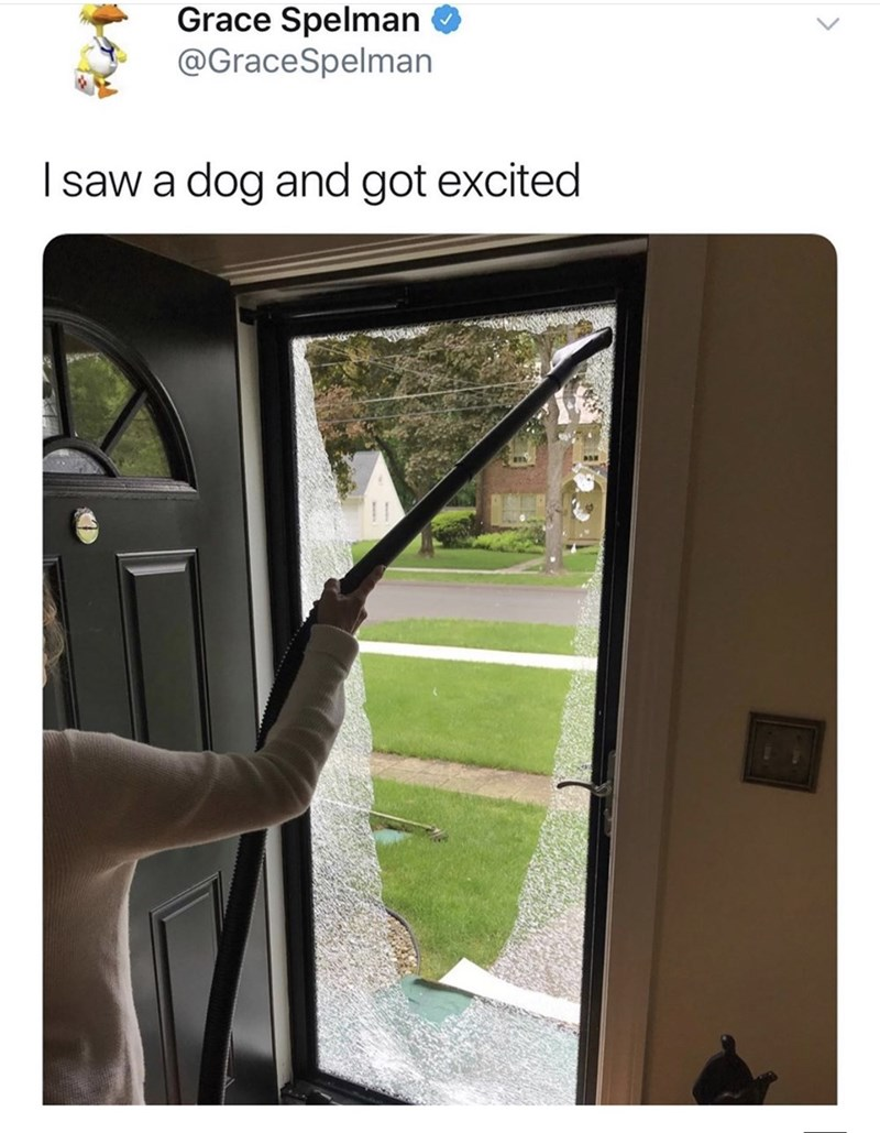 Meme - Grace Spelman @GraceSpelman Isaw a dog and got excited