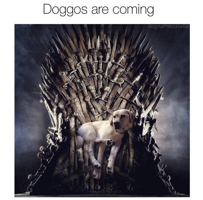 Organism - Doggos are coming dognamedstella