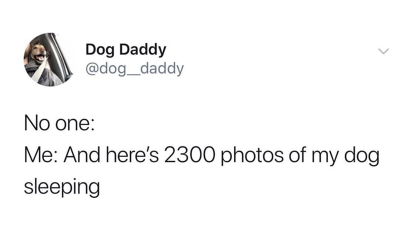 Text - Dog Daddy @dog_daddy No one: Me: And here's 2300 photos of my dog sleeping